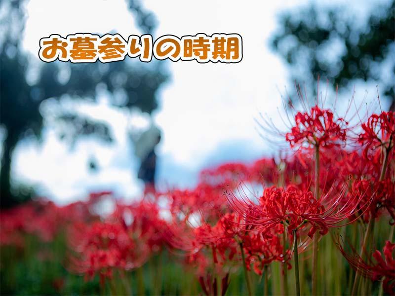 彼岸花はお墓参りの時期に咲く
