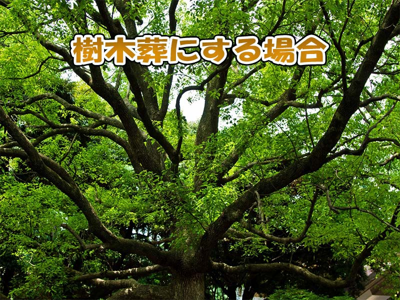 樹木葬にするパターン