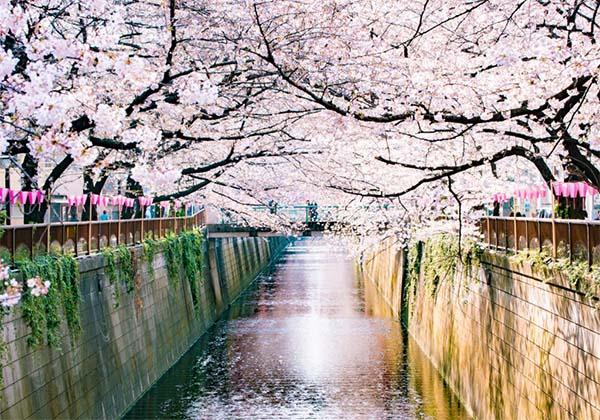 春のお彼岸の季節に咲く桜
