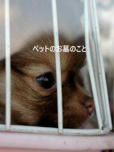 ペットの供養専門家