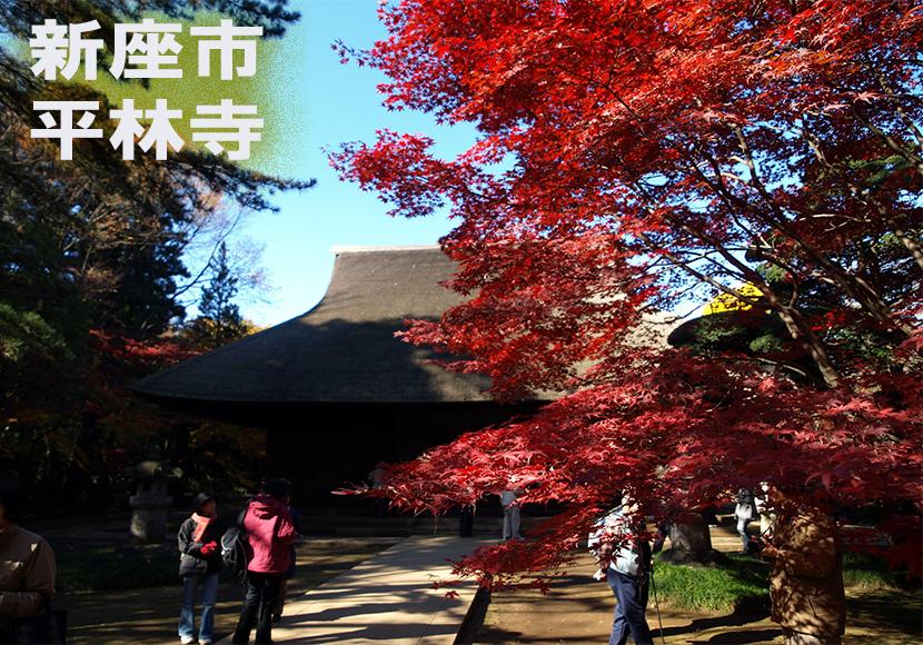新座市天然記念物平林寺