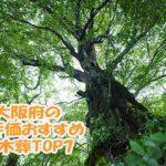 高評価でおすすめな永代供養できる樹木葬ランキング7|大阪府編