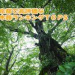 高評価でおすすめな人気の樹木葬ランキング5|東京都編