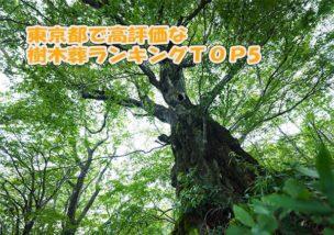 東京都で高評価な人気樹木葬墓ランキングTOP5