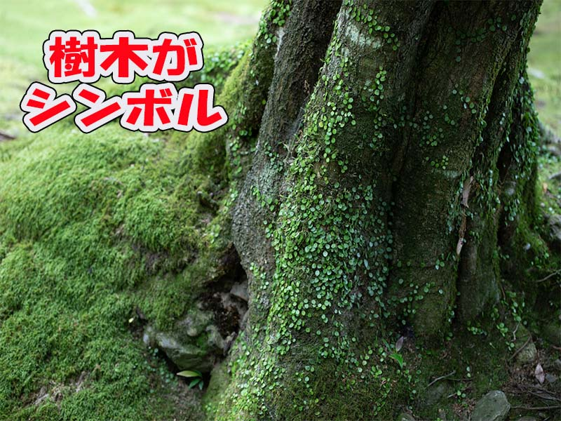 樹木葬墓地とは樹木がシンボルのお墓